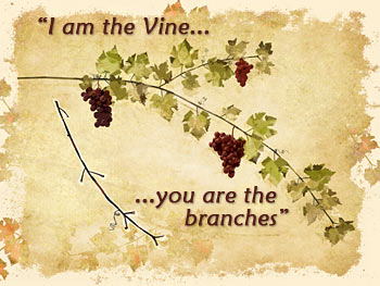 Jesus is the Vine; We are the Branches